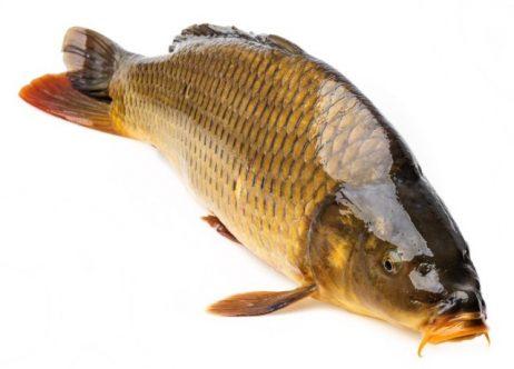 село02 рыба карп