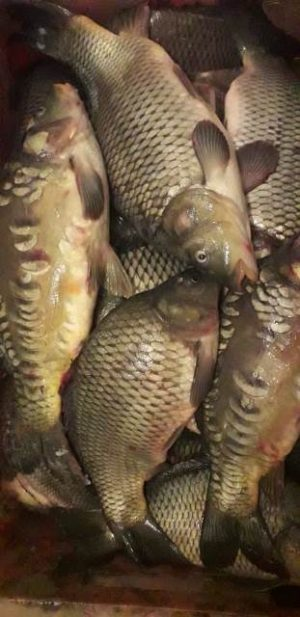 жива рыба, уфа , натуральные продукты