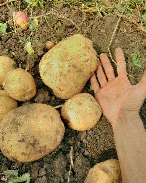 овощи село02, доставка продуктов, фермерские продукты